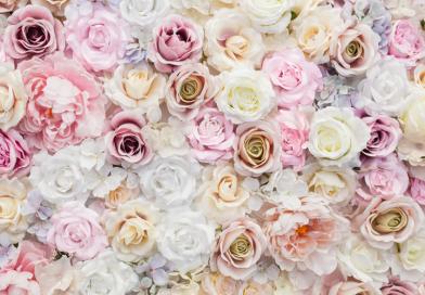 Wiosna w aromacie róży